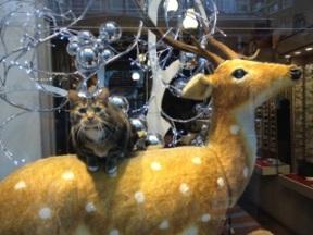 Nogle katte er på arbejde i julen
